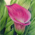 Calla Lily  by: Ronda Bryce, Watercolor, 8.5
